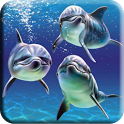Beatiful Dolphin Wallpapers icon