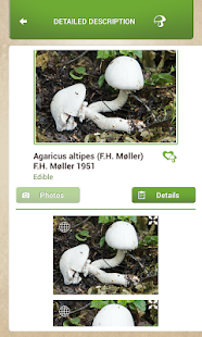 Mushrooms Sync- screenshot thumbnail