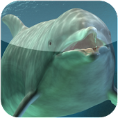 dolphin weather widget