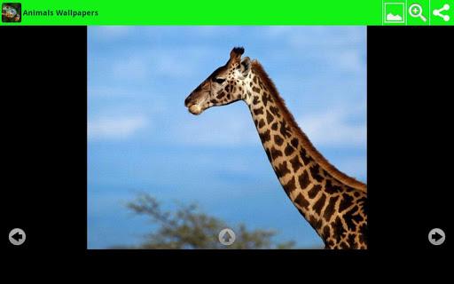 大動物壁紙|玩個人化App免費|玩APPs