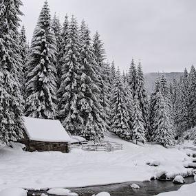 winter  by Fița Ciprian - Black & White Landscapes