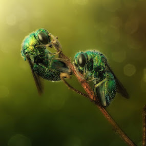 couple by Dhimas Prastowo - Animals Insects & Spiders ( #couple, #animal, #insect, #bugs, #macro,  )