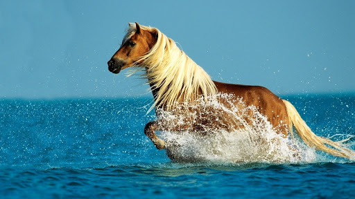 【免費個人化App】Cute Horse wallpaper-APP點子