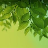 Magic Leaf Live Wallpaper