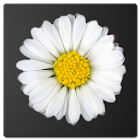 Daisy Battery Widget Lite icon