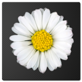 Daisy Battery Widget Lite