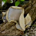 Ear mushroom