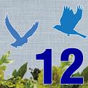 12星鳥占い:あなたに近々起こる現実と「今後の人生」 icon