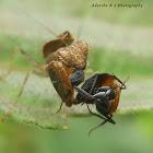 Praying mantis v/s Ant