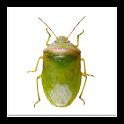 SE Agricultural Stink Bug ID