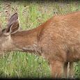 Wildlife in Grays harbor,Wa