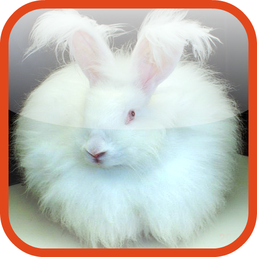 Bunny Pro Skater LOGO-APP點子