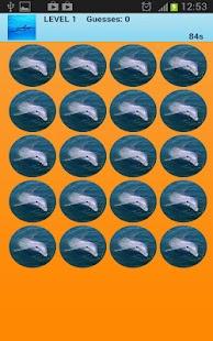 海豚記憶遊戲