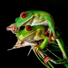 by Robert Cinega - Animals Amphibians ( #GARYFONGPETS, #SHOWUSYOURPETS )