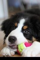 Screenshot of Dog Clicker