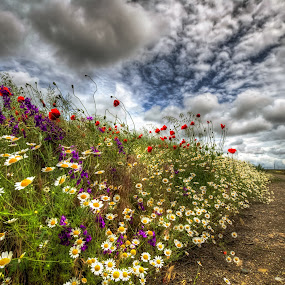 Invasion of spring by Lupu Radu - Flowers Flowers in the Wild ( field, spring colorful flowers, path, flowers, spring, , #8rtcoMagazine )