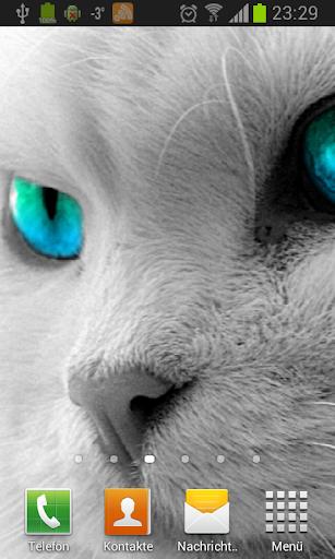 Белые кошки живые обои