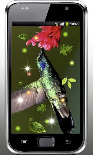 Colibri Amazing live wallpaper