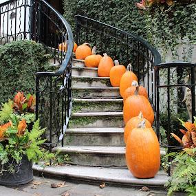 Autumn In The City by Sona Decker - City,  Street & Park  Street Scenes (  )