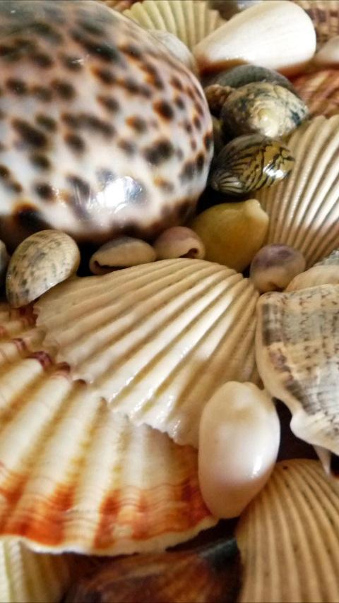 Sea Shell Wallpapers - screenshot
