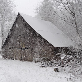 Out in the Cold by Deegee English - Buildings & Architecture Decaying & Abandoned ( barn, winter barn, snow fall on barn, old barn, snow barn, , snow, winter, cold, black and white, b&w, landscape )