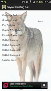 Coyote Hunting Call- screenshot thumbnail