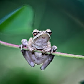 by Afandi Nugroho - Animals Amphibians