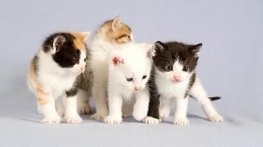 Cat Tickle Kitten