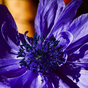 ...so blue... by Angeline JoVan - Novices Only Flowers & Plants ( blue, flower,  )