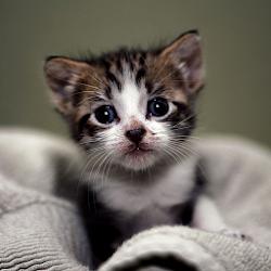 Beautiful Kittens HD Wallpaper