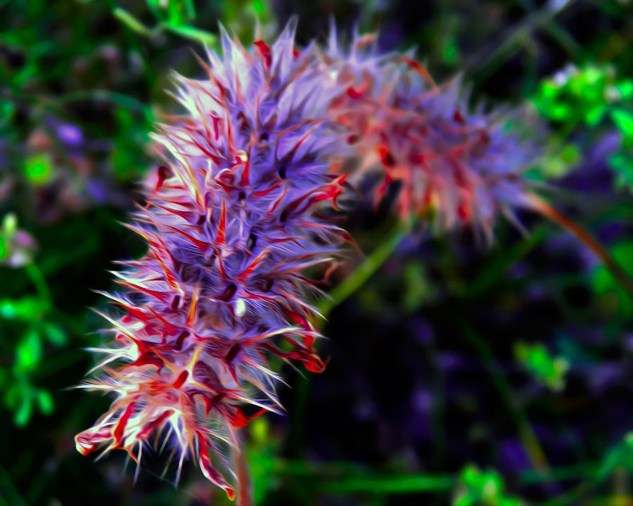 by Slavko Marčac - Nature Up Close Leaves & Grasses