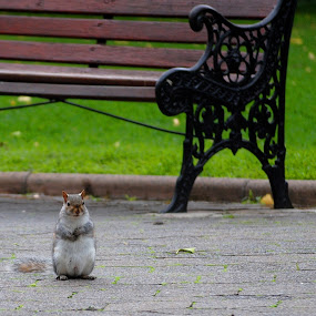 Waiting by Sanjeev Sampath - City,  Street & Park  City Parks ( park, chip n dale, furry, squirrel, hope )