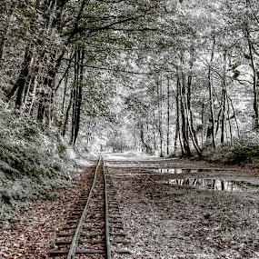 fairytale railway  by Ray Heath - Landscapes Travel ( uk, b&w, rudyard lake, rudyard, miniature railway, staffordshire, railway track, , relax, tranquil, relaxing, tranquility )