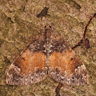 The Common Marbled Carpet