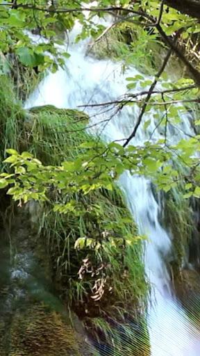 Waterfall Leaves LWP HD