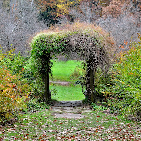Garden Entry by Jojo Garcia - Nature Up Close Trees & Bushes ( fall leaves on ground, fall leaves )