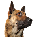 Dog Training Pro icon