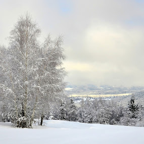 Winter by Silva Predalič - Landscapes Weather ( birch, winter, snow, trees, light,  )