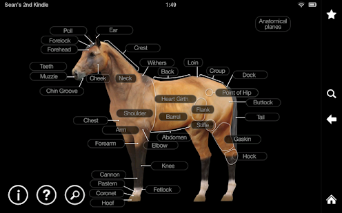 玩免費醫療APP|下載Horse Anatomy: Equine 3D app不用錢|硬是要APP