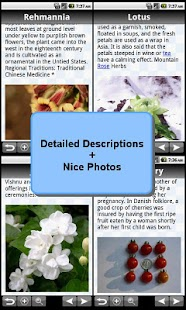 Medicinal Herbs Bible