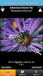 Audubon Insects & Spiders - screenshot thumbnail