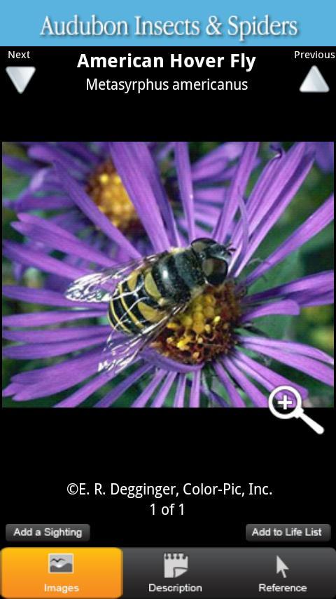 Audubon Insects & Spiders - screenshot