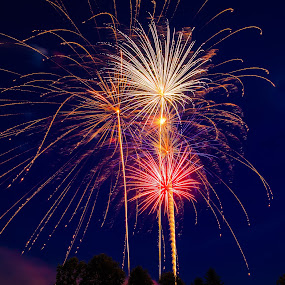 Fireworks over the Pines by Troy Snider - Public Holidays July 4th ( fireworks, july 4th, celebration, pyrotechnics, independence day )