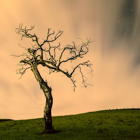 ... by Matheus Dalmazzo - Nature Up Close Trees & Bushes ( clouds, itapetininga, cinestudio, exposition, tree, stars, long )
