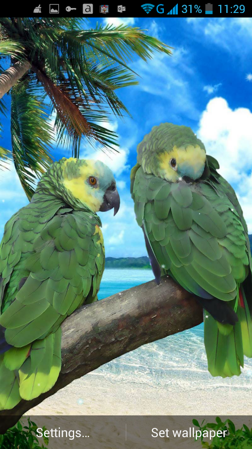 Papegaai live agtergrond is n ongelooflike nuwe natuur agtergrond