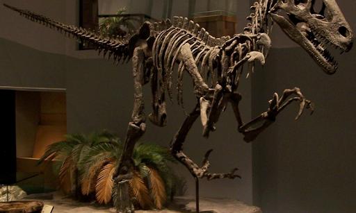 恐龍骨骼壁紙