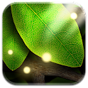 Tap Leaves Live Wallpaper icon