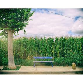 Park by Ricardo Rocha - City,  Street & Park  City Parks ( crop field, tree, bench, green )