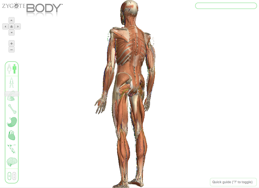 Zygote Body by Zygote | Experiments with Google