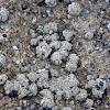 mollusk on the reefs